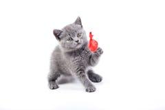 Playful little kitten isolated on white Stock Image