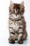 Playful little kitty Royalty Free Stock Photos