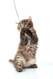 Playful little kitty Stock Photos