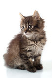 Playful little kitty royalty free stock photo