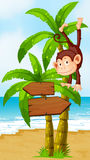 A playful monkey at the beach with an arrowboard Stock Images