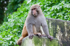 Playful monkeys Stock Images