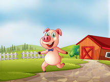 A playful pig with a barn at the back Stock Image