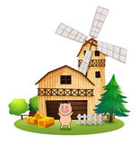 A playful pig outside the wooden barnhouse with a windmill Royalty Free Stock Images