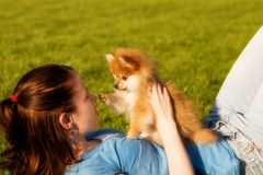 Playful Pomeranian Pup. Attractive teen holding her adorable Pomeranian puppy as she lays on a grassy lawn. They are looking into each other's eyes stock photo