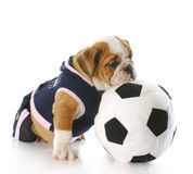 Playful puppy Stock Images