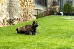 Playful puppy dog Royalty Free Stock Photos
