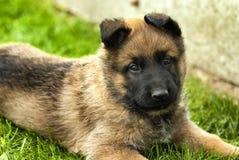 playful puppy dog Stock Photo