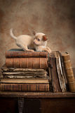 Playful puppy on old books Stock Photo