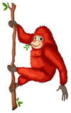 A playful red orangutan royalty free illustration