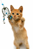Playful red small cat Stock Images