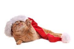 Playful Santa Cat. In Christmas Hat Royalty Free Stock Photo