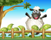 A playful sheep inside the wooden fence Stock Photography