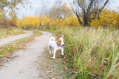 Playful small dog standing on a path in the forest in autumn royalty free stock photo