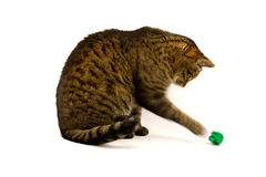 Playful Tabby Stock Photos