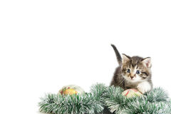 Playful tabby cat Stock Images