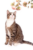 Playful tabby cat on white Stock Image