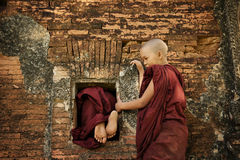 Playful young novices Stock Images