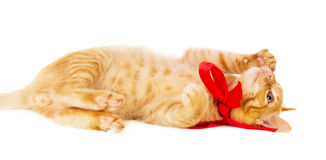 Playful young redhead cat lies on the floor Stock Image