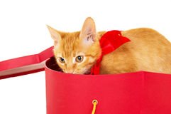 Playful young redhead kitty sits in a box Stock Photography