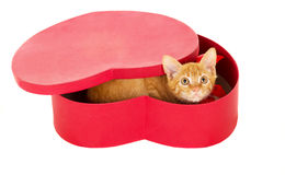 Playful young redhead kitty sits in a box Stock Photos