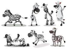 Playful zebras. Illustration of the playful zebras on a white background Stock Photography