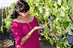 Playfull brunette in the vineyard Royalty Free Stock Photography