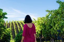 Playfull brunette in the vineyard Royalty Free Stock Photo