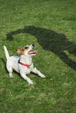 Playfull dog stock images