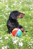 Playfull doggie Stock Afbeeldingen