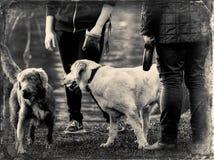 Playfull dogs stock image
