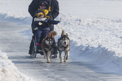 Playground Dogsled Royalty Free Stock Images