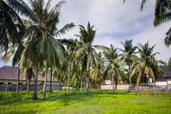 Playground - football field among palm trees in the tropics. Playground - football field in the courtyard amid palm trees and houses in a tropical country Stock Image