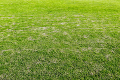 playground, Green lawn and dried grass texture, Green and light Royalty Free Stock Photo