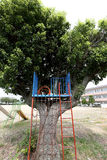 Playground slide. Children in the park, playground slide on a tree Royalty Free Stock Photos
