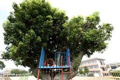 Playground slide. Children in the park, playground slide on a tree Stock Photos