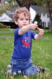 Playin met Paardebloemen Royalty-vrije Stock Fotografie