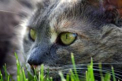 Playing. Close-up cat playing in the grass Royalty Free Stock Photography
