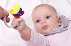 Playing baby. Baby girl clutched colorful toy Royalty Free Stock Images