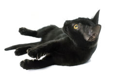 Playing black kitten Royalty Free Stock Photography