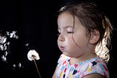 Playing and blowing on a dandelion Stock Images