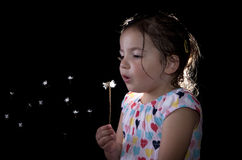 Playing and blowing on a dandelion Stock Photography