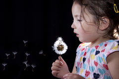 Playing and blowing on a dandelion Royalty Free Stock Photography