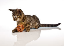 Playing cat, christmas Royalty Free Stock Photos