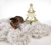 Playing cat, christmas Royalty Free Stock Images