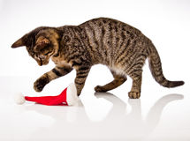 Playing cat, christmas Royalty Free Stock Image