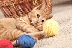 Playing cat. Little cat playing with wool on the carpet Stock Photos