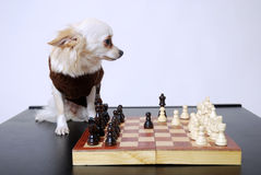 Playing chess Royalty Free Stock Photography