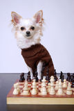 Playing chess Stock Image