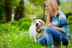 Playing with dog. Beautiful woman with playful young dog on fresh green meadow Royalty Free Stock Images